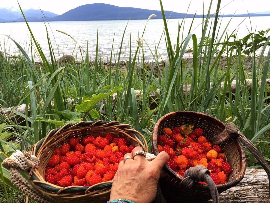 Fresh-picked salmon berries - Auke Bay, Alaska